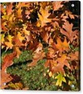 Autumn Fragrance Acrylic Print
