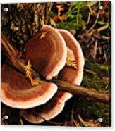 Autumn Fungi Acrylic Print
