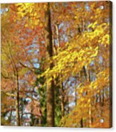 Autumn Gold  Acrylic Print