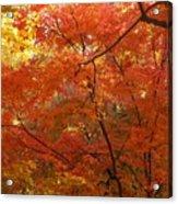 Autumn Gold Poster Acrylic Print
