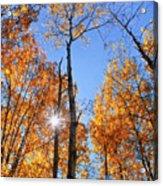 Autumn Gold Sunburst Acrylic Print