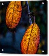 Autumn Gradation Acrylic Print