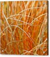 Autumn Grass Abstract Acrylic Print