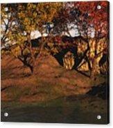 Autumn Grove Acrylic Print
