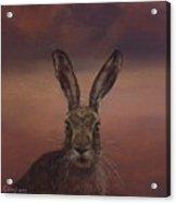 Autumn Hare Acrylic Print