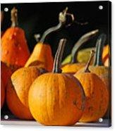 Autumn Harvest Gourds Acrylic Print