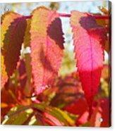 Autumn Has Arrived Acrylic Print