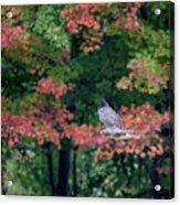 Autumn Hawk Square Acrylic Print