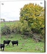 Autumn Herd Acrylic Print