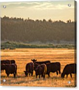 Autumn Herd Acrylic Print