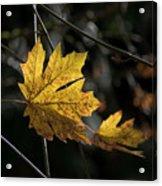 Autumn Highlight Acrylic Print