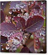 autumn Huckleberry leaves macro in autumn Acrylic Print by Ed Book