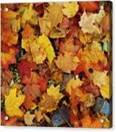Autumn In Canada Acrylic Print