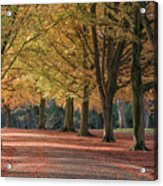 Autumn In Clifton, Bristol Acrylic Print