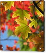 Autumn In Color Acrylic Print