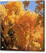Autumn In Curtin Acrylic Print