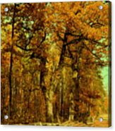Autumn In Forest Acrylic Print