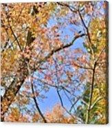 Autumn In Full Swing Acrylic Print