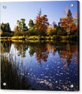 Autumn In Maine Usa Acrylic Print