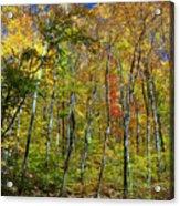 Autumn In Schooley's Mountain Park 2 Acrylic Print