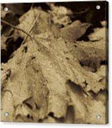 Autumn In Sepia Acrylic Print