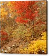 Autumn In Shenandoah Acrylic Print