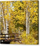 Autumn In Teton National Park Acrylic Print