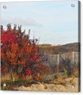 Autumn In The Dunes Acrylic Print