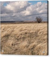Autumn In The Steppes Acrylic Print
