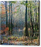 Autumn In The Swamp Acrylic Print