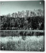 Autumn In The Wetlands - Black And White Acrylic Print