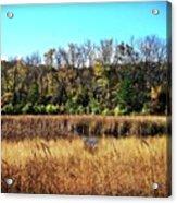 Autumn In The Wetlands Acrylic Print