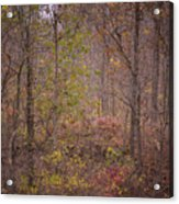 autumn In The Woos Acrylic Print