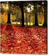 Autumn In Woodthorpe Acrylic Print