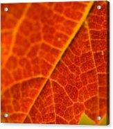 Autumn Intensity Acrylic Print