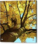 Autumn Is My Favourite Colour Acrylic Print