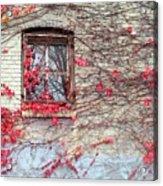 Autumn Ivy Acrylic Print