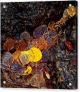 Autumn Jewels.. Acrylic Print