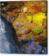 Autumn Jewels Acrylic Print