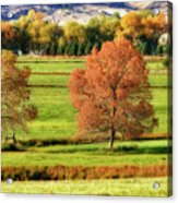 Autumn Landscape Dream Acrylic Print by James BO  Insogna