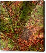 Autumn Leaf Detail Acrylic Print