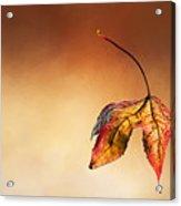Autumn Leaf Fallen Acrylic Print