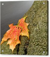 Autumn Leaf Study Acrylic Print