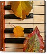 Autumn Leaf Trio on Piano Acrylic Print