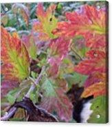 Autumn Leafs Acrylic Print