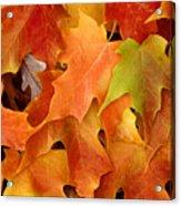 Autumn Leaves - Foliage Acrylic Print