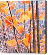 Autumn Leaves 2 Pdae Acrylic Print