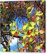 Autumn Leaves 243 L Acrylic Print