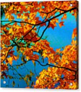 Autumn Leaves 7 Acrylic Print