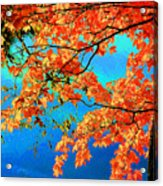 Autumn Leaves 8 Acrylic Print